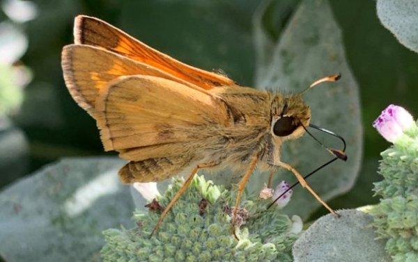 Profile picture of Tilia Baratta